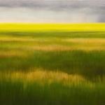 Meadow & Rain