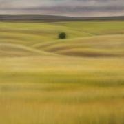 Grasslands Solitary