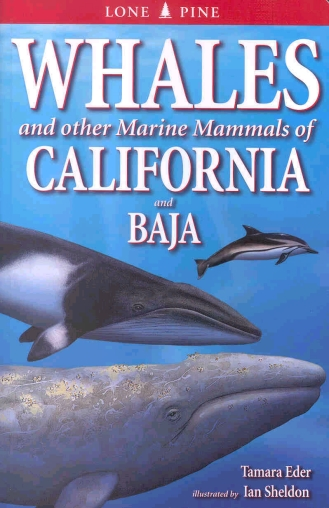 Whales And Other Marine Mammals Of California And Baja